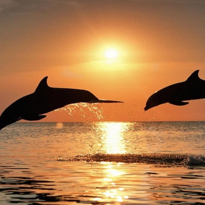 Dolphin Sunset Cruise